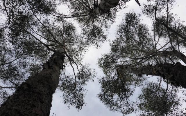 Threatened Vegetation Communities