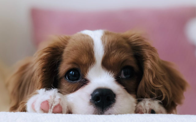 Dog Registration & Information